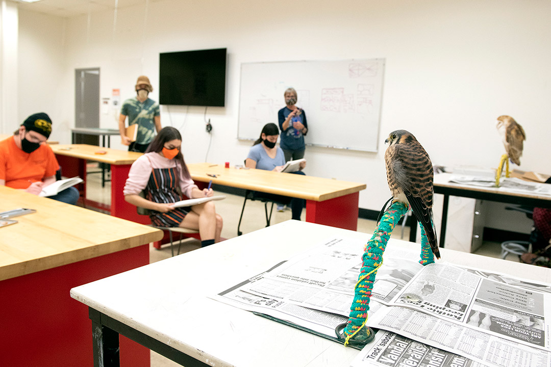Live birds, management for introverts, and creating new foods among classes awaiting RIT students